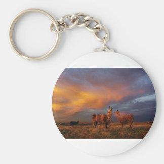 Lamas im Grasland-Sonnenuntergang Schlüsselanhänger