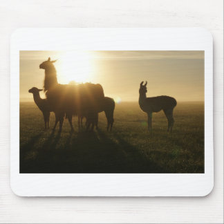 Lamas morgens mousepad