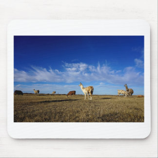 Lamas unter einem Graslandhimmel Mousepad