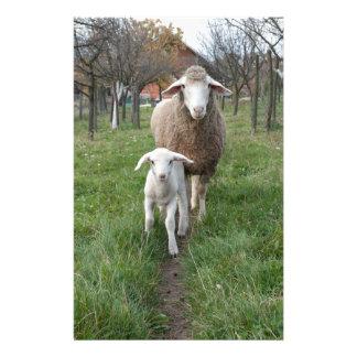 Lamm und Schafe Briefpapier