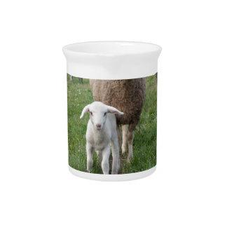 Lamm und Schafe Getränke Pitcher