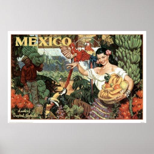 Land der tropischen Pracht Posterdrucke