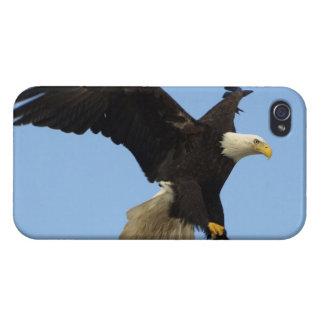 Landendes kahler Adler Wildife Foto Schutzhülle Fürs iPhone 4