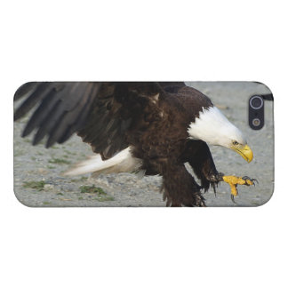 Landendes kahler Adler Wildife Foto Schutzhülle Fürs iPhone 5