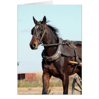Ländliches amisches Pferd und Buggy Karte