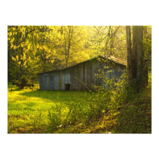 Ländliches Tennessee-Frühlings-Morgen-Licht Fotodruck