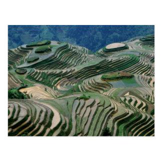 Landschaft der Reisterrassen im Berg, Postkarte
