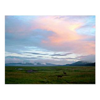 Landschaft mit blauem Himmel und Antilopen des Pfi Postkarte
