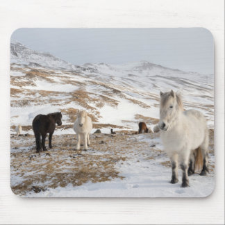 Landschaft mit isländischen Pferden Mousepad