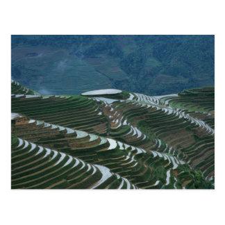 Landschaft von Reisterrassen im Berg, 2 Postkarte