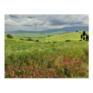 Landwirtschaftliches Feld, Toskana-Region von Postkarte