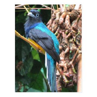 Lang angebundener blauer Vogel Postkarte