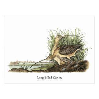 Lang-berechneter großer Brachvogel, John Audubon Postkarte