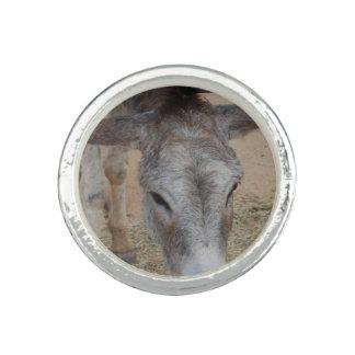 Langer ohriger Esel