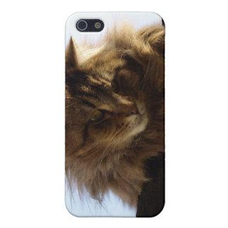 Langhaariger Tabby-Katze TieriPhone Fall Hülle Fürs iPhone 5
