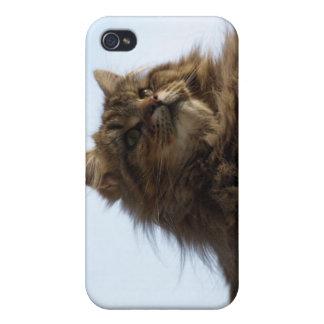 Langhaariger Tabby-Katze TieriPhone Fall iPhone 4/4S Hülle
