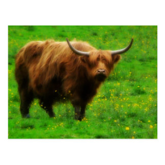 Langhaariges Longhorn mit langen Hörnern Postkarte