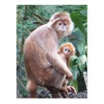 Langur-Affe-Mutter u. Baby Postkarten