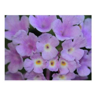 Lantana-Blumen-Postkarte Postkarte