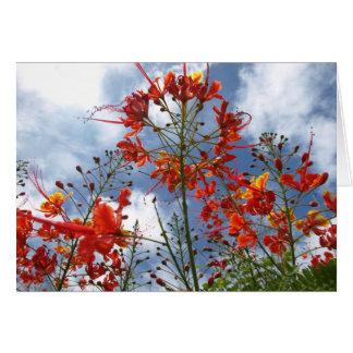 Lantana-Blüte Karte
