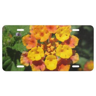 Lantana-Wüsten-Blume US Nummernschild