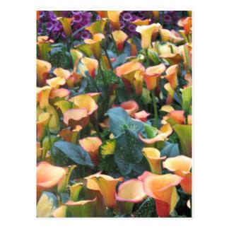Las- Vegasschmetterlings-Garten-Blumen-Marienkäfer Postkarten