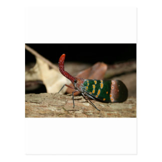 Laternenzikade Postkarte