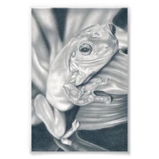 Laubfrosch - Bleistiftzeichnung Fotodruck