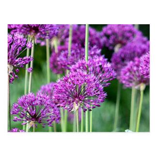 Lauch-Blumen Postkarte