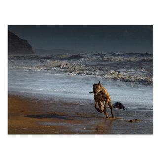 Laufender Brindled Lurcher-Windhund auf Strand Postkarte