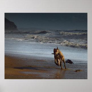 Laufender Lurcher auf Strand Poster