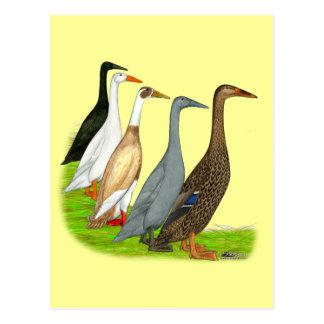 Läufer-Enten-Zusammenstellung Postkarte