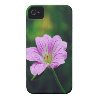 Lavendel-Blumen mit Inspirational Zitaten iPhone 4 Etuis