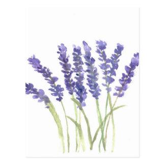 Lavendel-Blumen Postkarten