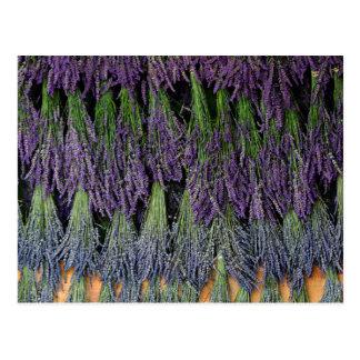 Lavendel-Bündel auf einem trocknenden Gestell Postkarten