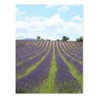 Lavendel Feld in der Provence Postkarte