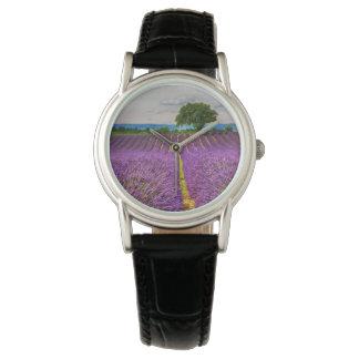 Lavendel-Feld landschaftlich, Frankreich Uhr