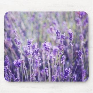 Lavendel-Feld Mousepad