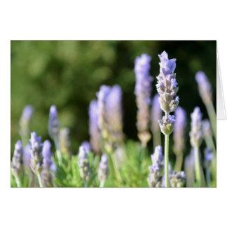 Lavendel-Foto-Karte Karte