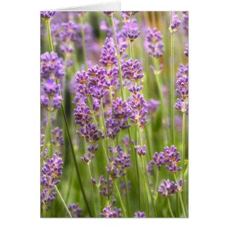 Lavendel Grußkarte