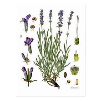 Lavendel Postkarten