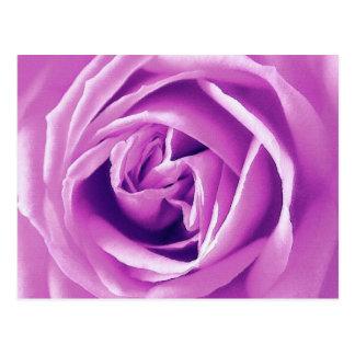 Lavendel-Rosendruck Postkarte