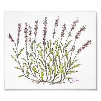 Lavendel-Skizze-Druck Kunstfoto