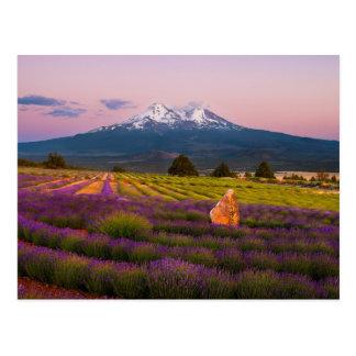 Lavendel-Sonnenuntergang Mt. Shasta… Postkarte
