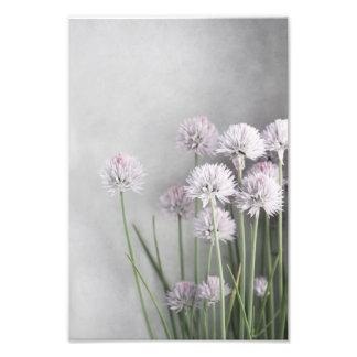 Lavendel und grüne Schnittlauche auf weich Grau Photodruck