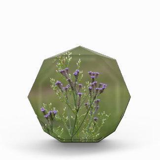 Lavendel-Verbene-Wildblumen Auszeichnung