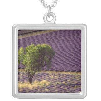 Lavendelfeld in hoher Provence, Frankreich Versilberte Kette