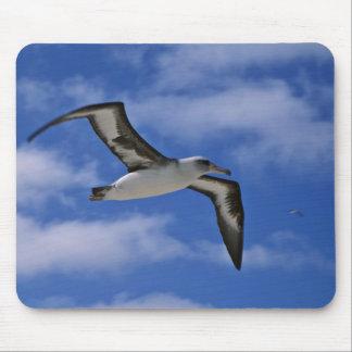 Laysan Albatrosfliegen in einer Luft Mauspad