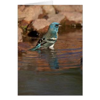 Lazuli-Flagge (Passerina amoena) herein badend Karte