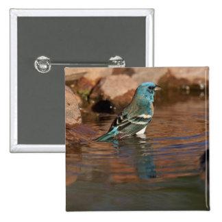Lazuli-Flagge (Passerina amoena) herein badend Quadratischer Button 5,1 Cm